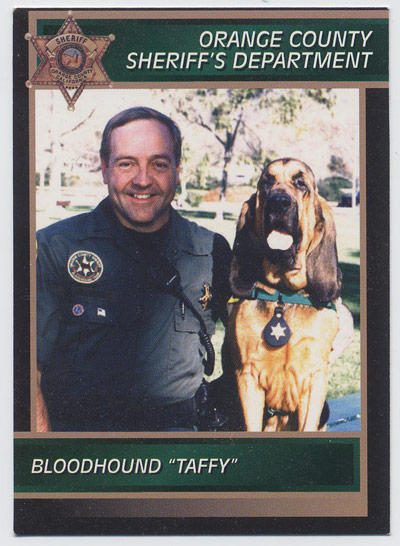 Taffy the Bloodhound